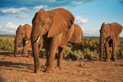 Image Éléphant matriarcat africain contre un ciel bleu