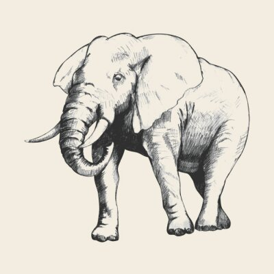 Image Elephant Sketch