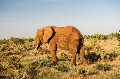 Image Éléphant, Tsavo, Est, national, Parc, Kenya