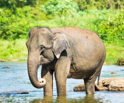 Image Elephat