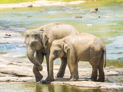 Image Elephatnts