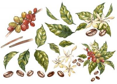 Image Ensemble de grains de café arabica rouge sur la branche avec des fleurs isolées, illustration aquarelle.
