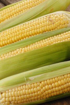 Image épi de maïs