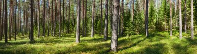 Image Été forêt panorama