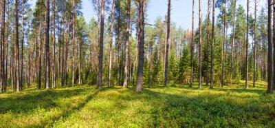 Image Été, pin, forêt, panorama