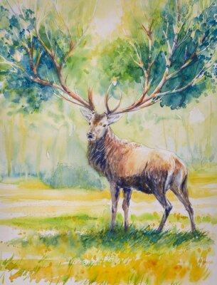Image Été.Red cerf avec de grandes cornes sur dont grow feuilles. Image créée avec des aquarelles.