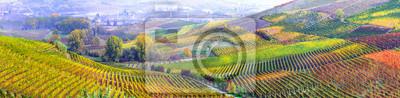 Image Étonnante vaste plantation de raisin dans le Piemonte - célèbre région viticole de l'Italie