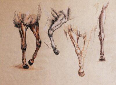 Image Étude des jambes de cheval
