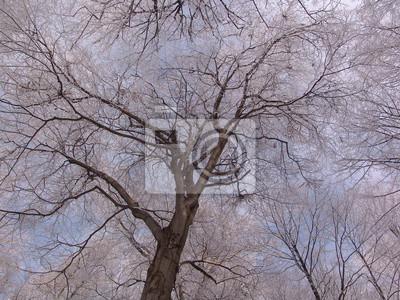 Image Exterieur Foret Bois Nature Hiver Arbre Naturel Saisonnier