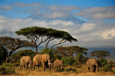 Image Famille d'éléphant en face du mont. Kilimanjaro