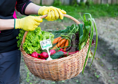 Farmer holding basket with healthy bio vegetables