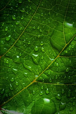 Image feuille verte