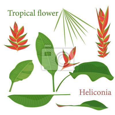 Feuilles De Fleurs Tropicales De Branche Dheliconia Aquarelle