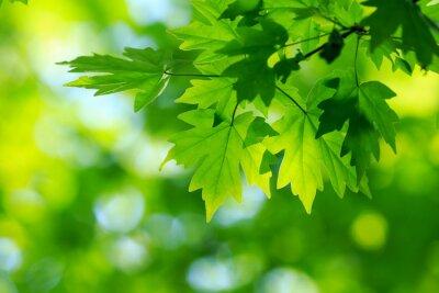 Image feuilles vertes