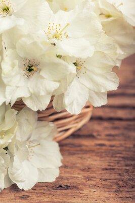 Image Fin, haut, blanc, fleurir, cerise, panier, vendange, style