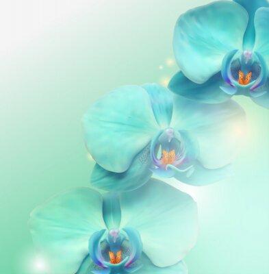 Image Fleur d'orchidée fond