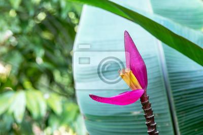 Fleur De Bananier Peintures Murales Tableaux Ecchymose Murissent
