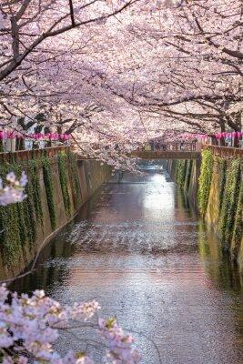 Image Fleur de cerisier bordée de Meguro Canal à Tokyo, au Japon.