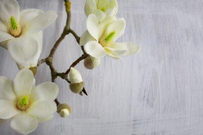 Image Fleur de fleur de magnolia