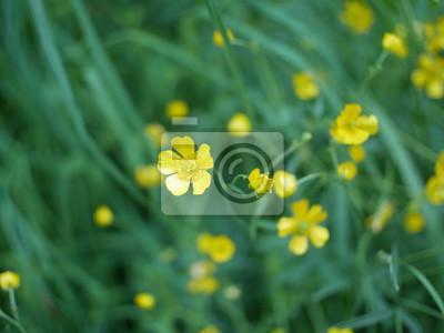 Image Fleur Jaune