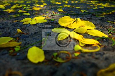 Fleur Rajapruk ou Golden Shower Fleur d'arbre.