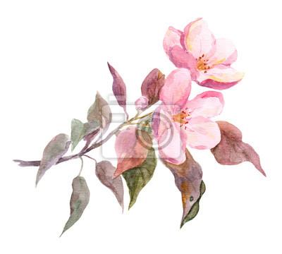 Fleur Rose De Pommier Dessin Aquarelle Peinte A La Main Peintures