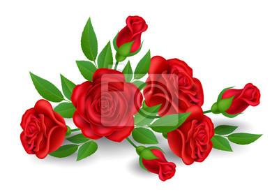 Fleur Rose Rouge Realiste Avec Bourgeon Et Feuille Isole Sur