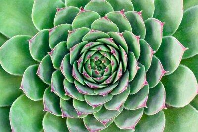 Image fleur verte
