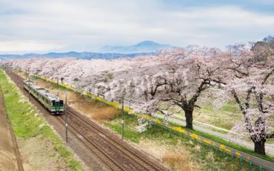 Image Fleurs de cerisier ou Sakura et train local