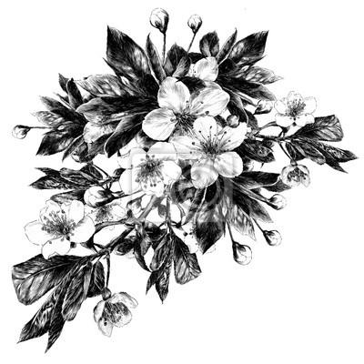 Image Fleurs De Pomme Croquis Dessin Vectoriel Noir Et Blanc Monochrome