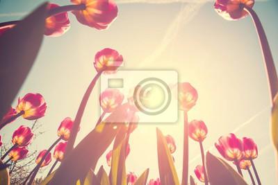 Image Fleurs de tulipes