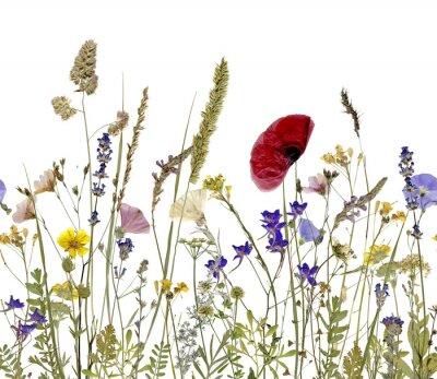 Image Fleurs et herbes