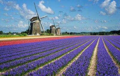 Image Fleurs et Moulins à vent en Hollande