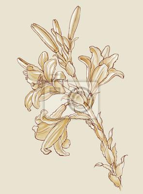 Fleurs Lys Base Sur Le Dessin De Leonard De Vinci Peintures Murales