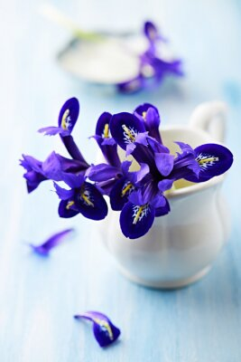Image Fleurs violettes iris dans une tasse millésime