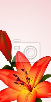 Image Floral, carte, bannière, bicolore, lis