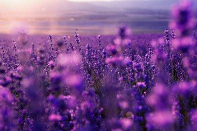 Image floue de fond d'été de l'herbe et des fleurs sauvages de lavande