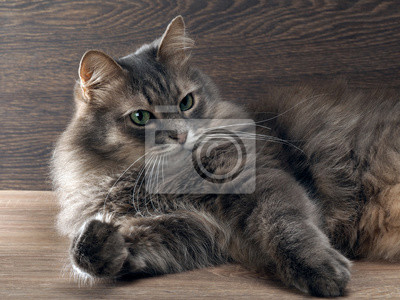 poilu chatte sombre