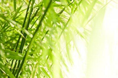 Image Fond de bambou vert