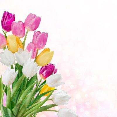 Image Fond de printemps