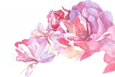 Image Fond rose illustration aquarelle