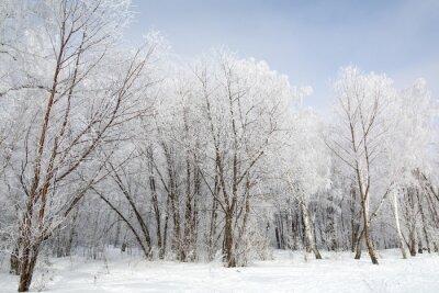 Image Forêt d'hiver
