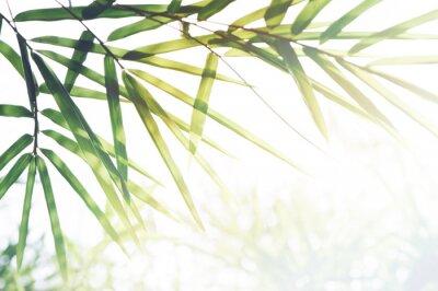 Image Forêt de bambous ou feuillage de bambou et lumière du soleil et espace pour le texte