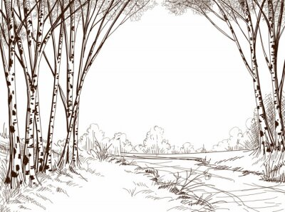Image Forêt de bouleau, fond graphique