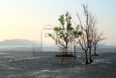 Forêt de mangrove à côté de plage d'île de Yao Noi, Phang Nga, Thaïlande.