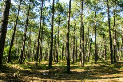 Image Forêt landaise