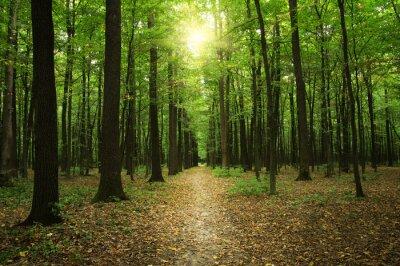 Image Forêt, lumière soleil