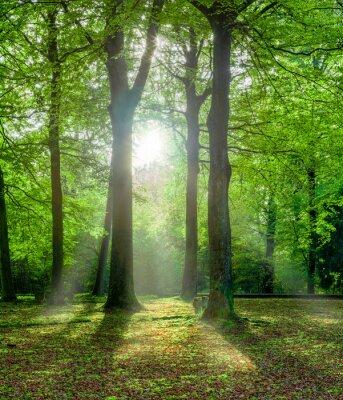 Image forêt vert en été avec rétroéclairage