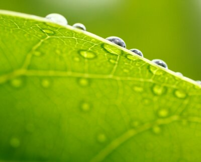 Image Frais fond de feuille verte