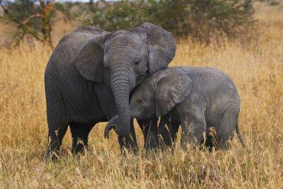 Image Frères éléphants